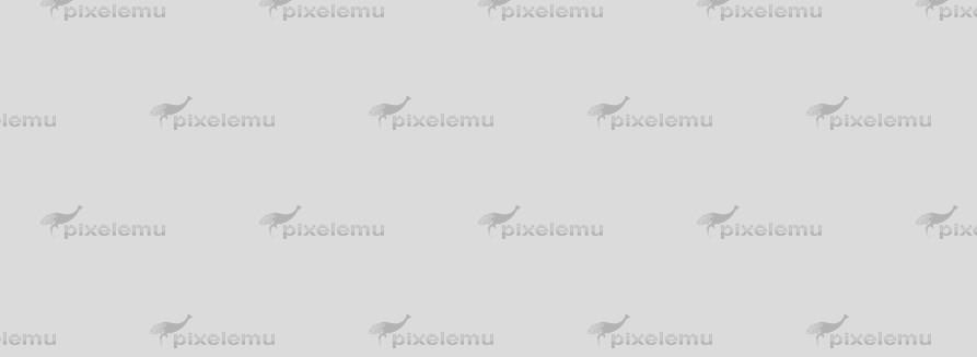 Phasellus lobortis